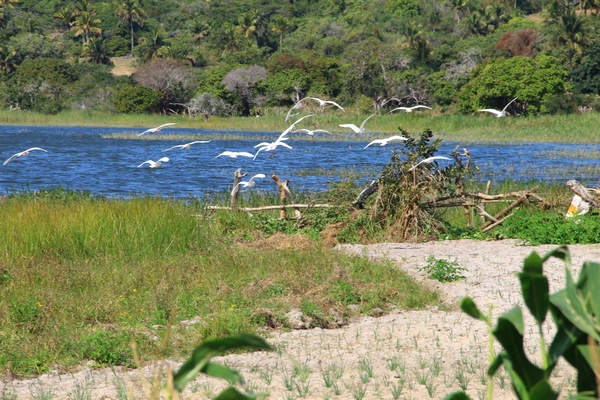 the-egrets-of-the-lake-nature-activities-Mozambique